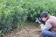 来宾哪育桔子树苗|来宾哪里有桔子树苗培育基地