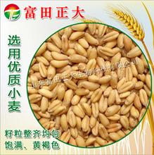 供应膨化小麦粉富含膳食纤维天然面粉饲料添加剂,饲料原料