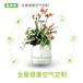 氧妈妈健康e宝-生态植物空气净化器除甲醛制氧加湿氧吧体验智能APP