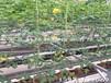 葉菜基質種植槽椰糠種植槽