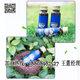 蓝莓果汁酵素饮22