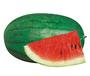 新疆农乐农业种子——买水果种子就来这