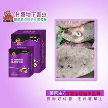 紅薯蠐螬金針蟲小象甲防治吡蟲啉氟蟲腈薯幫主地瓜地下害蟲殺蟲劑