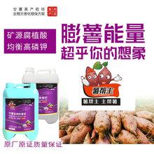 紅薯專用肥地瓜專用肥高鉀肥甘薯沖施肥礦源腐植酸