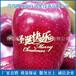 山东青岛厂家专业生产打造新技术高品质圣诞苹果印字机