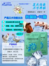 降温解暑、抗应激冰爽VC抗菌肽VC图片
