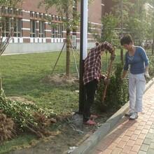做绿化就找专业北京绿化公司图片