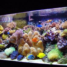 观赏型鱼缸水族箱,鱼缸厂家,鱼缸定做