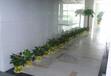 杭州滨江萧山区域内免费绿植租赁盆景租摆