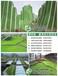 中牟佛甲草屋顶绿化工程,你身边的绿化专家