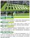 新密佛甲草屋顶绿化工程,实现零维护