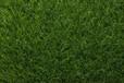 ?#29992;?#20154;造草坪仿真草坪地毯塑料假草坪人工草皮楼顶幼儿园阳台绿植