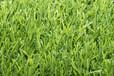人造草坪厂家仿真草坪价格塑料假绿植幼儿园人工草坪厂家直销