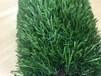 厂家直销30mm庭院装饰楼顶绿化人工草坪塑料草坪厂家人造草坪价格