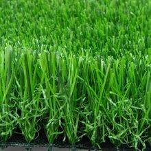 仿真草坪地毯室内幼儿园塑料假草皮人造草坪室外绿化景观装饰加密仿真草坪