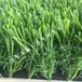 廠家直銷人工塑料假草皮批發人造草坪地毯運動草坪仿真草坪幼兒園