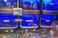 德國進口海鮮池定做佛山水產魚缸廠家魚池制冷設備公司