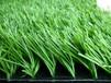 厂家供应单丝双色足球场人造草坪,标准足球场铺装施工,学校操场场地建设