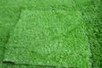 供应户外绿化装饰人造草坪,仿真草坪_高度密度可调,屋顶围挡工地草坪