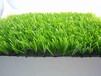 人造草坪厂家,全型号仿真草坪,足球场专用草坪,幼儿园人造草坪