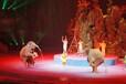 动物表演出租杂技表演租赁大型皇家马戏团主题全套租赁