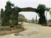北京水泥假树大门制作北京生态园仿真树大门设计施工