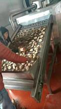 厂家直销HK-400多功能食品烘干机网带式猕猴桃片烘干机药材多层烘干机图片
