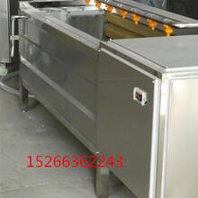 厂家直销HK-1200型多功能毛刷清洗机牛蒡清洗机萝卜清洗设备图片