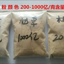 泰安晨輝生物供應100-1000億枯草芽孢桿菌水產養殖專用圖片