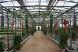 山东展览温室的造价,植物观光园温室建设厂家