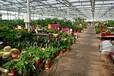 农业观光玻璃温室大棚造价合理建设厂家