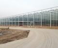 山东文洛型玻璃温室大棚建设厂家哪家好