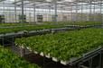 山东四季花卉种植温室大棚建设厂家