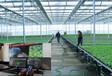 山東物聯網智能玻璃觀光溫室大棚工程建設廠家