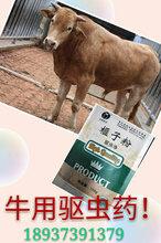 牛羊驱虫药牛羊驱虫用什么药好孕畜可以使用驱虫药吗图片