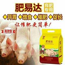 猪吃什么长得快快速养猪法猪催肥最简单方法图片