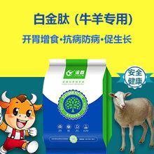 肉牛催肥王肉牛吃什么長得快肉牛飼養方法圖片