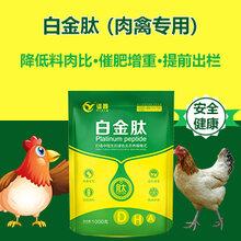 肉鸭催肥用什么肉鸭吃什么长得快肉鸭增重用什么好图片