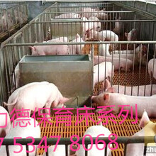 仔猪保育床的优点是什么哪里有卖