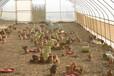 北京溫室大棚建造廠家,蔬菜大棚公司