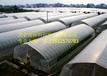 赤峰蔬菜大棚建造厂家北京蔬菜大棚建造成本蔬菜大棚