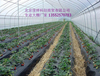 大棚价格温室大棚成本蔬菜大棚建造价格建造温室大棚厂家