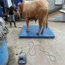山西3T电子地上衡动物称重防腐蚀地磅价格