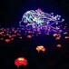 龙君展览有限公司信誉保证灯光节厂家策划