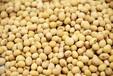 国庆双节前国储大豆开拍因保管时间长质量可能有变化
