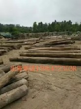下房老榆木生产厂家老榆木加工定做板材榆木原木榆木房梁图片
