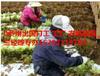 华人直招出国劳务项目工作签证出国合法打工
