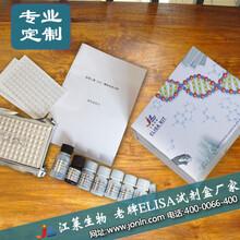 巨噬细胞来源趋化因子MDC试剂盒(种属:全)操作说明书图片