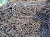 望牛墩镇东兴废旧机器回收废旧机械回收厂家。