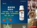 市场唯一可茎叶喷施不影响效果的线虫药,根结线虫特效药图片